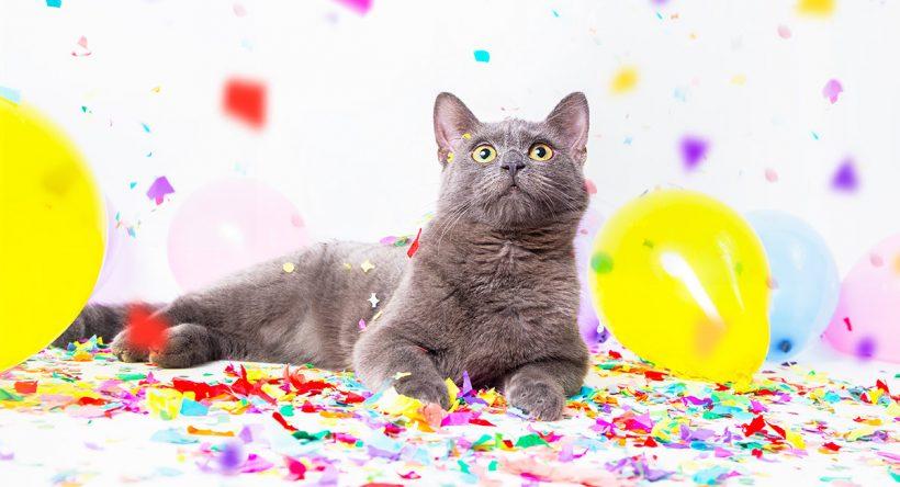 Gato en un cumpleaños con globos