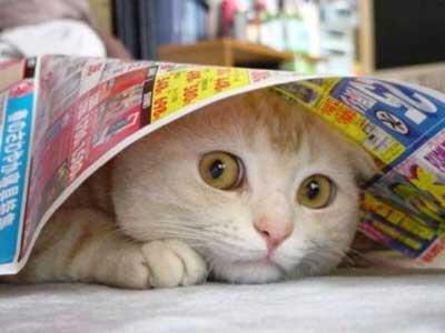 Gato debajo de un periódico