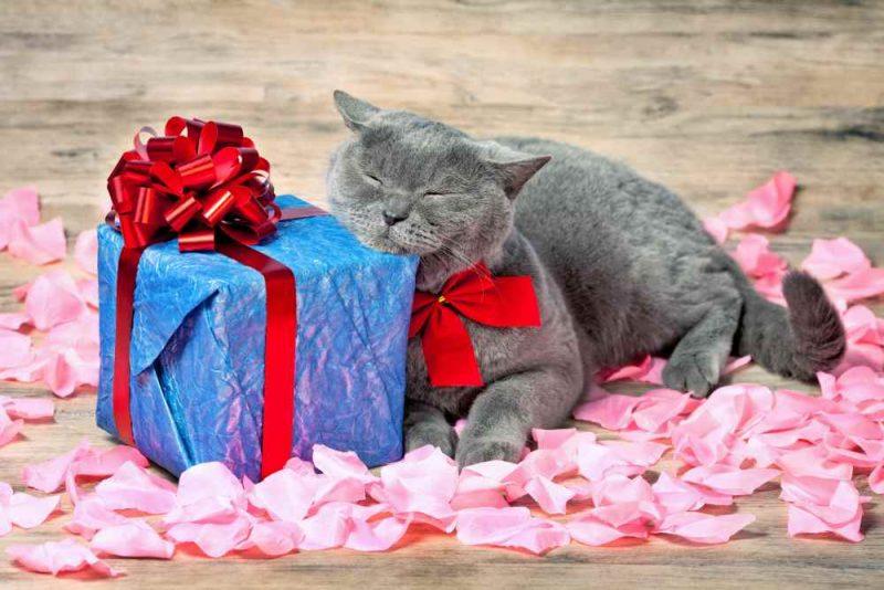 Gato con regalo de cumpleaños