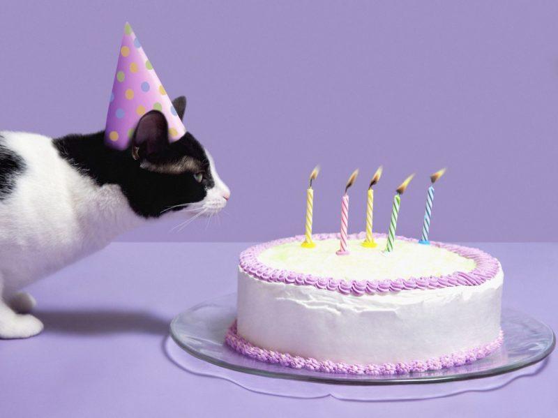 Gato soplando velas de cumpleaños