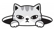 Gato saliendo de alcantarilla